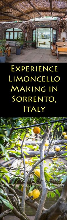 Travel to Sorrento, Italy to experience Limoncello making