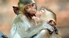 Funny Animals Kissing | Kissing Animals