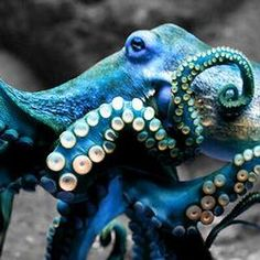Tweets with replies by Octopus (@Octopus) | Twitter