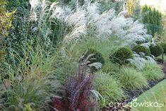 Ogród z lustrem - strona 361 - Forum ogrodnicze - Ogrodowisko Plants, Plant, Planets