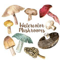 Watercolor Mushrooms Clip Art Set, Digital Mushroom Clipart, Fungi Watercolors, Fungus Clip Art, Culinary Clipart, Mushroom Art, Food Art