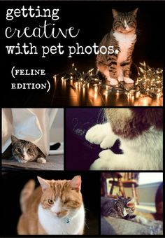 10 Tips for Creative and Clever Pet Photos: Feline Edition (mrow)
