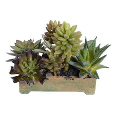 Create a lush tablescape or charming vignette with this lifelike faux succulent, showcasing an array of eye-catching silhouettes nestled in a terracotta plan...