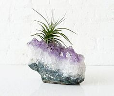 Air plants in hanging containers are not a hot news new. We shall show you 20 air plant containers and terrarium ideas which offer great possibilities Succulents Garden, Garden Plants, Planting Flowers, Moss Garden, Succulent Planters, Hanging Planters, Hanging Basket, Air Plants, Indoor Plants