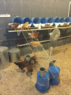 Nesting boxes we made from 5 gallon buckets