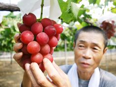 The operator of a wedding hall in Japan just spent $5,400 on a single bunch of 30 Ruby Roman grapes, which are each roughly the size of a table-tennis ball.