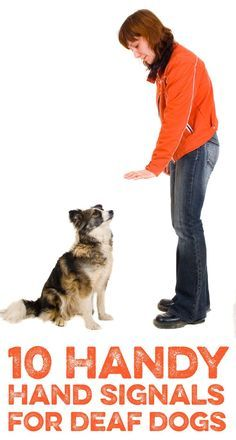 10 Handy hand signals for deaf dogs! #pets #care #dogs #cats #deaf #caring #training #education #tips
