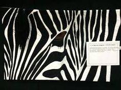Afbeeldingsresultaat voor zebra quilt