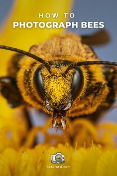 Learn how to take photos of bees with this macro and close-up nature photography tutorial. Bee photo tips for you! Wildlife Photography Tips, Photography Basics, Photography Tips For Beginners, Outdoor Photography, Photography Tutorials, Nature Photography, Take Better Photos, How To Take Photos, Fast Shutter Speed