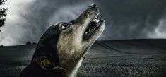 Apoquel promises to stop itching fast. But at what cost to health? I'll help you decide if it has any place in your medicine kit. Sombre, Healthy Pets, Dog Photography, Dog Training Tips, Happy Dogs, Dog Walking, Dog Owners, Animals And Pets, Best Dogs