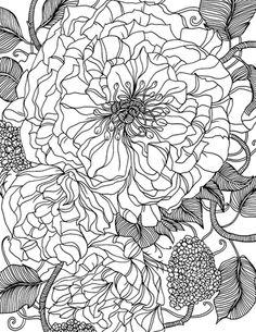 Line Floral - Lindeberg / Illustrator: Liselotte Watkins