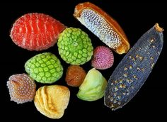 The intricacy and diversity of the seed -  Image by Rob Kesseler…