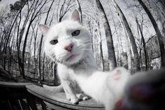 App Cat Snaps permite que gatos tirem suas próprias selfies