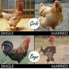 Single Life Vs. Married Life - Likes