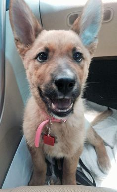 Bella the Mixed Breed http://www.dailypuppy.com/puppies/bella-the-mixed-breed_2014-06-28