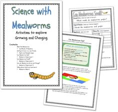 how to grow mealworms into beetles