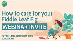 Are you a new fiddle leaf fig owner and wonder how best to care for your fiddle leaf fig plant? Discover The Ultimate Fiddle Leaf Fig Care Webinar. Join Claire Akin of The Fiddle Leaf Fig Plant Resource Center as she explains how best to care for your fiddle leaf fig, what to do about brown spots on fiddle leaf fig leaves, and more! Types Of Houseplants, Fiddle Leaf Fig Tree, Fig Leaves, Brown Spots, Plant Care, House Plants, Claire, How To Find Out, Join