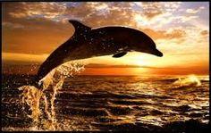 Resultado de imagen para delfines animados enamorados
