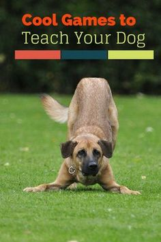 Pet Training - Enjoy a little bonding time during dog training with these five cool games you can teach your dog. Your pup will learn new skills while having fun! This article help us to teach our dogs to bite just exactly the things that he needs to bite Love My Dog, Dog Games, Golden Retriever, Labrador Retriever, Dog Training Tips, Potty Training, Training Classes, Training Schedule, Training Equipment