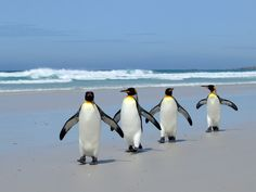 Image detail for -PENGUINS ON THE BEACH WALLPAPERS | PENGUINS ON THE BEACH STOCK PHOTOS