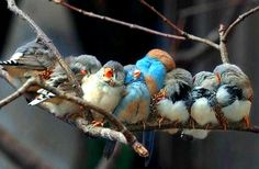 Birds of a Feather Flock Together | The Daily Neuron