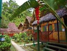 Nice bungalows in the jungle Ecuador, Jungle Life, Amazon Rainforest, Lodges, Things To Do, Places To Go, Pergola, Beautiful Places, Bungalows