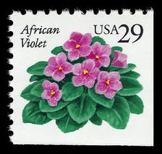 The US Postal Service issued a 29-cent stamp depicting an African Violet on Oct 8, 1993, at the African Violet Society of America's annual meeting in Beaumont, TX.  Source:  http://africanvioletstest.pbworks.com