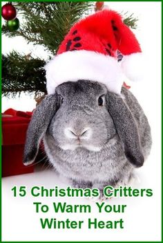 15 Christmas Critters To Warm Your Winter Heart!  ... from PetsLady.com ... The FUN site for Animal Lovers