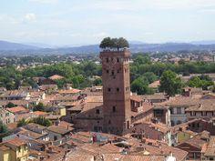 Torre Guinigi: The Tower with Oak Trees on the Top ~ Kuriositas