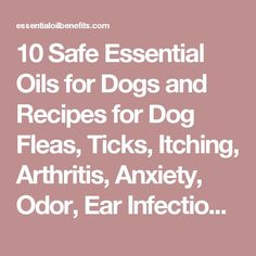 >>>Cheap Sale OFF! >>>Visit>> 10 Safe Essential Oils for Dogs and Recipes for Dog Fleas Ticks Itching Arthritis Anxiety Odor Ear Infections and Better Health Are Essential Oils Safe, Essential Oil Uses, Doterra Essential Oils, Young Living Essential Oils, Ear Infection Home Remedies, Dogs Ears Infection, Food Dog, Dog Food Recipes, Flea Remedies