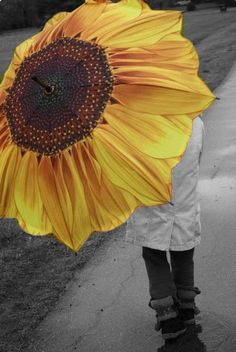 I think it would be nice to have a bright sunflower in the midst of a downpour.
