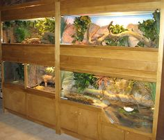 This display was built for Venomous snakes in NC for Howell  Woods Nature Center by Jworlds.net