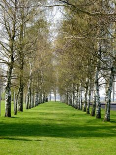 Row of Green Trees and Grass in a Peaceful Setting Photo - Photography - Nature Photography