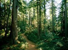 woodland - Google Search