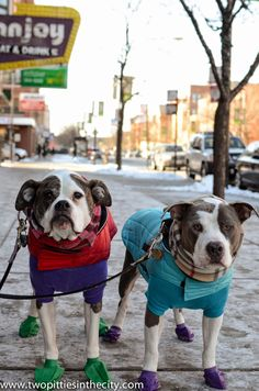 DoggyStyle: Dog Gear for Walking, Running and On a Budget