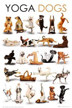Poster: Yoga - dogs online te koop. Bestel je poster, je 3d filmposter of soortgelijk product Maxi Poster
