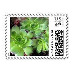 These #green #succulent #plant #postage #stamps brighten up any correspondence, but they're especially pretty when used to send #wedding, #bridal #shower, engagement #party, vow renewal, or anniversary #invitations, #announcements, save the dates, RSVPs, and thank you notes. Available in horizontal or vertical design format and fully customizable / personalizable (simply add your own names, dates, and/or phrase when ordering). #stamp #floral #foliage #postal #plants