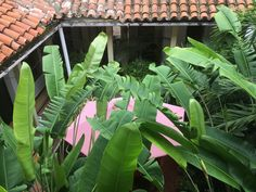 Plant Leaves, Plants, Santa Cruz, Planters, Plant, Planting