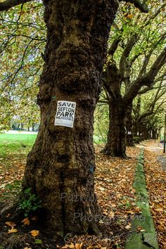 Sefton Park Meadows - Liverpool In 2013, after the Council received record breaking numbers of written objections, the Mayor went ahead with marketing Sefton Park Meadows for sale. In August 2014 Redrow was announced as the Council's preferred developer for the potential sale of this 2.62 hectare public open green space. Whose Garden Was This?