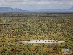 Elefantes rojos en Kenia
