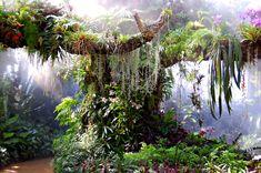 The jungle Denver Botanic Gardens! I wonder if they allow wedding photos in the conservatory? Tropical Garden, Tropical Plants, Succulent Planters, Succulents Garden, Hanging Planters, Denver Travel, Denver Hiking, Travel Oklahoma, Aquarium Terrarium