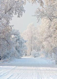 noël,déco,cadeaux,recettes,hiver,décembre,fête,repas,menu,gâteaux,friandises,rouge,vert,sapin,intérieur,home,vacances,froid,ambiance,christmas