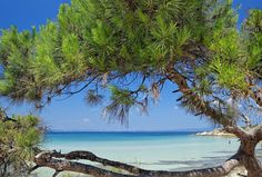 Summer is coming! ☀️🏖🍹 With a coastline of 550 km, Halkidiki has the best beaches in Greece. Most Beautiful Beaches, Beautiful Places, Places Around The World, Around The Worlds, Places To Travel, Places To Visit, Halkidiki Greece, Green Scenery, Places In Greece