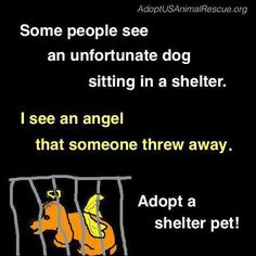 I found my angels...visit your local shelter and you will be sure to find yours. ♥