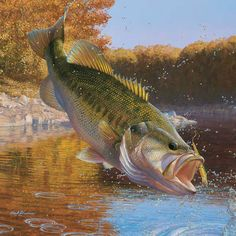 A little knowledge about the Largemouth bass fish is important for successful Largemouth bass fishing. Largemouth bass fishes have typical jazzed strips formed by dark spots. The distinctive physical feature of Largemouth bass fish is the upper jaw. Bass Fishing Tips, Fishing Pictures, Fishing Life, Gone Fishing, Best Fishing, Trout Fishing, Kayak Fishing, Fishing Stuff, Fishing Humor