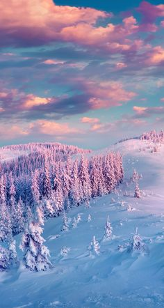 love this awesome winter forest scene