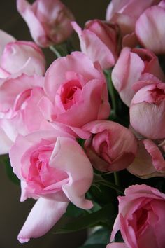 rose pink yves piaget .Order David Austin Roses and other scented roses online @ www.parfumflowercompany.com