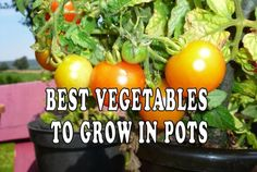 Growing vegetables in pots.    The lack of gardening space and arable land is a problem for most urban dwellers. However, you shouldn't give up on your dream of having home-grown vegetables. There are always solutions and growing vegetables in pots can be done wherever you live.