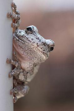 All sizes | Amphibian Acrobat | Flickr - Photo Sharing!