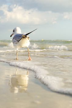 le sentiment de la mouette ⚓ photo by tina nord (seascape marine beach) Beautiful Birds, Animals Beautiful, Cute Animals, Animals Sea, Beautiful Images, Beautiful Beach, Beach Art, Ocean Beach, Photo Animaliere